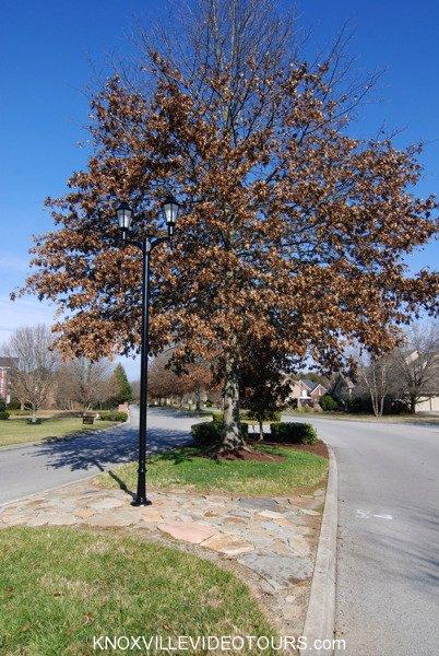 Fox Run Knoxville street lamp