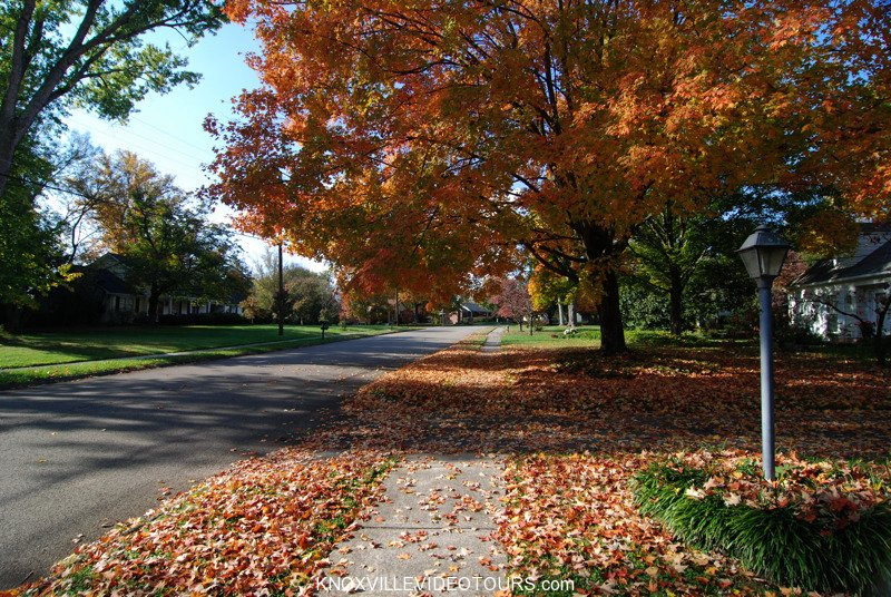 Picture yourself walking along this sidewalk in Village Green